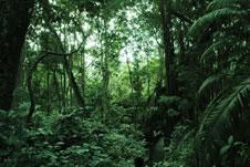 Scheda animali - Gli animali della foresta pluviale di daintree ...